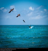 Ecuador Coastal Birds